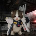 Transformer-Cat