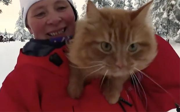 cat-jesper2-large