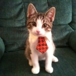 gato-corbata