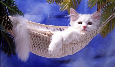 gato-descansando