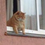 gato-esperando