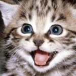 gato-feliz