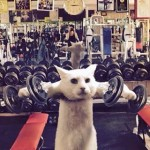 gato-gym