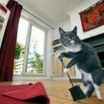 gato-limpiando