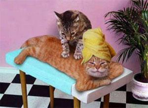 gato-masaje