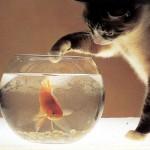 gato-pecera