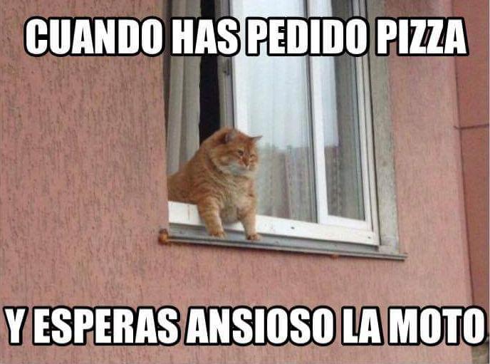 gato-pizza