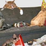 gatos-fiesta