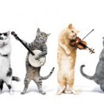 gatos-musicos