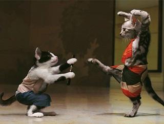 gatos-pelean-juegan