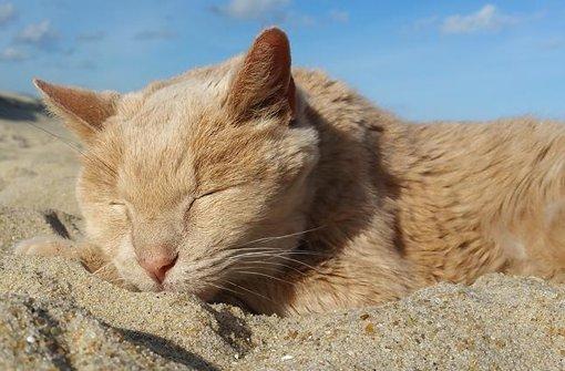 tigger-playa