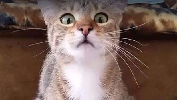 facebook-gato-miedo