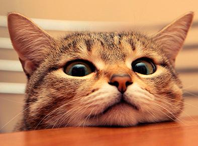 gato-esperando-