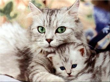 gato-gatito