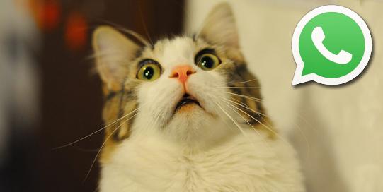 gato-icono-whatsapp