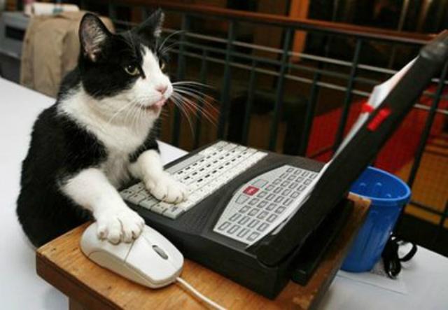 gato-internet