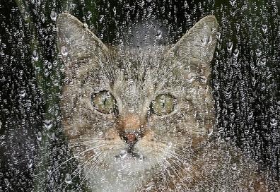 gato-lluvia-portada
