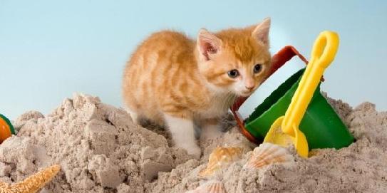 gato-verano