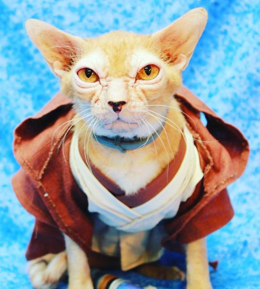 gato-yoda-disfrazado